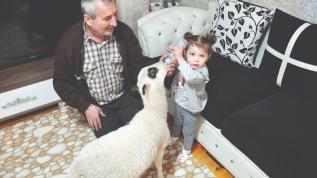 2 yaşındaki ela biberonla kuzu besliyor! Minik kalpler sevgiyle buluştu
