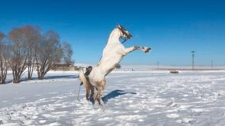Poyraz'ın kar mutluluğu