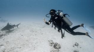 Köpek balıklarıyla kafessiz dalış