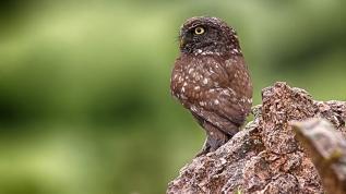 Kuş dedektifi yaban hayatın izini sürüyor