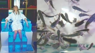 Doktor balıklar ihraç ediliyor