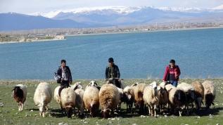 Çoban öğrenciler