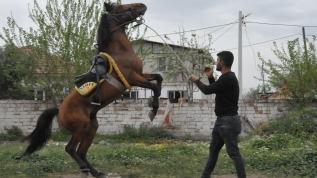 Bu köyün geçim kaynağı rahvan atlar