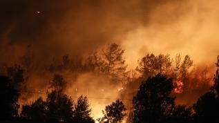 Manavgat'ta orman yangını felaketi