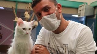 Van kedilerine ziyaretçi akını