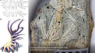 Şaşırtan fosil mezarlığı