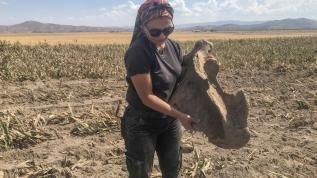 Mısır ekerken fil fosili buldular